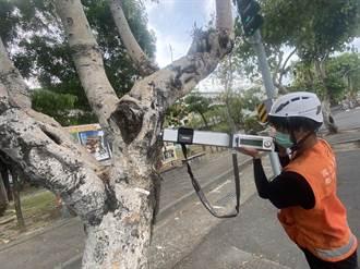 防路樹倒塌釀災非亂砍樹 台南將陸續移除598棵行道樹