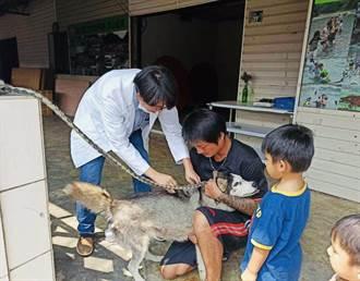 台灣首例黃喉貂染狂犬病後 嘉義家畜所籲別忘了帶家中犬貓打疫苗