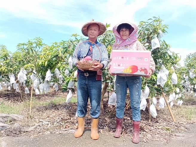 台南郵局與南化果樹產銷班合作行銷紅寶石愛文芒果,助農民行銷也捐款公益。(讀者提供/張毓翎台南傳真)