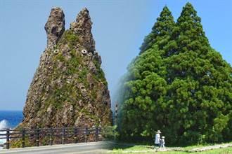 日本蒐奇!石頭和大樹居然長得像龍貓?