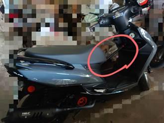 機車腳踏板上卡一根棍子 內行人曝真實用途:不是防狗