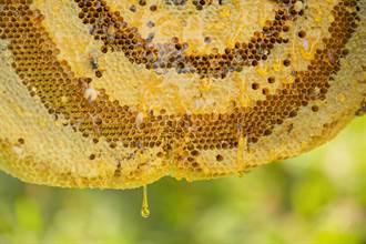 7樓窗外1.5公尺超巨蜂巢遭搗爛 蜂蜜像大雨落下超震撼