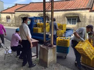 台南多元加工芒果收購每公斤10元 果農搶著交貨