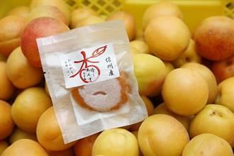 初夏限定!長野縣千曲市新鮮杏桃現採現吃