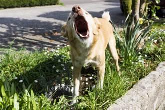 愛犬散步突對排水管狂吠 主人切開見驚喜:好有靈性