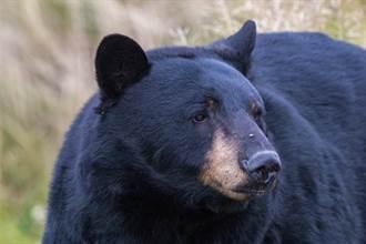 猛獸誤被愛犬認成同伴 幼熊玩嗨站起來 屁顛跟著狗萌翻