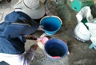疫情緩 台南登革熱病媒蚊指數大增 拉警報