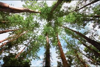 三級延長適度鬆綁 屏東林區管理處配合開放部分森林育樂場域