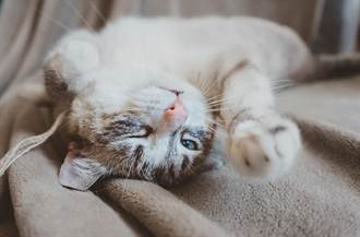 鬼逗貓?愛貓猛對空氣狂蹭撒嬌 120萬人全嚇壞