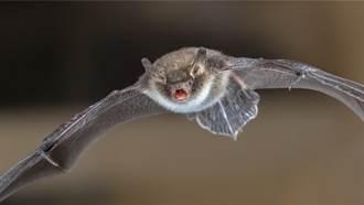 賞鳥拍到「貓臉蝙蝠」 眾人驚新品種 5千網知真相笑歪