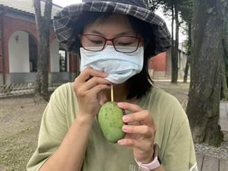 水道博物館示範土芒果在地吃法 網友驚呼:原來有這種吃法