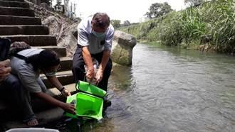 溪水量回穩 食水嵙溪台灣白魚放流原棲地