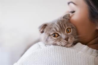走失寵物社團驚見愛貓美照 鏟屎官挖出真相超傻眼