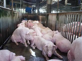 量少需求大豬價漲至85元 調節豬源8月可望回穩