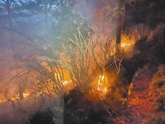 高海拔火燒山 珍貴森林資源盡毀