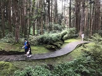 山林微解封首日 全台這5處森林遊樂區人最多