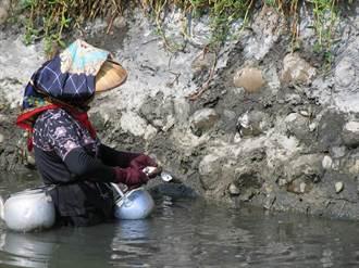 疫情影響漁民生計 全家挖石頭蚵貼補家用