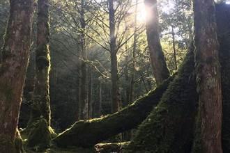 微解封  到宜蘭避暑「森」呼吸