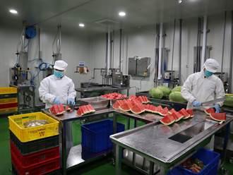 15度低溫切出水果商機 台中東勢區農會日供1500盒