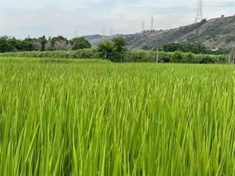 鎧全產業園區選址爭議 陳吉仲:不支持在優質農業區開發產業園區