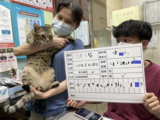 家犬貓絕育補助最高1200元 新北動保處提醒31日截止