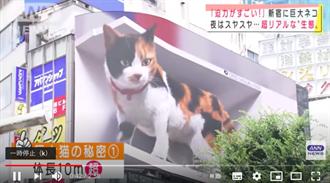 巨頭、巨貓跳出街頭 日藝術計畫「太可愛、會嚇到」