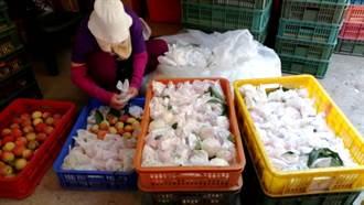拉拉山水蜜桃大豐收又賣到缺貨 業者:十幾年來首次