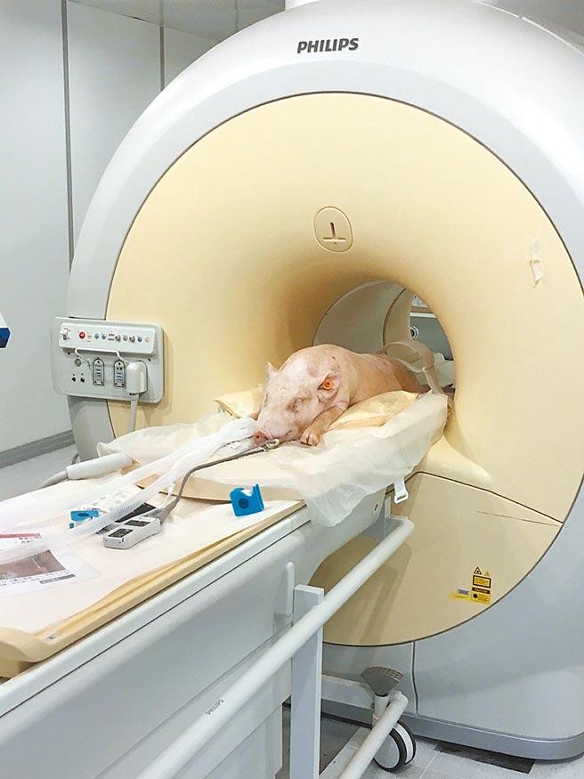 國家實驗研究院台灣儀器科技研究中心整合人類醫用等級造影設備,開發動物專用醫學影像造影系統。(國研院提供/李侑珊台北傳真)