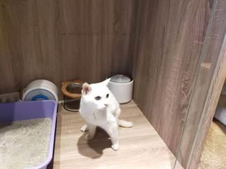新北確診飼主過世 託夢女兒找到防疫安置的23歲愛貓