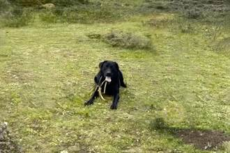 拉布拉多被遺棄4900M高山 見救命稻草飛奔趴大腿求救