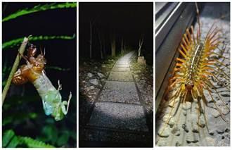 八仙山線上生態探索趣 開放報名
