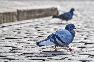 鴿子直奔醫院「掛號」 獸醫困惑檢查驚呼:太有靈性
