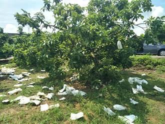 豪雨造成台南酪梨農損 每公頃救助7萬5000元