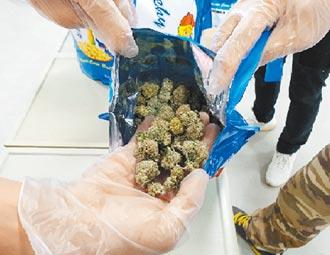 網購大麻辯助眠 法官竟然信了