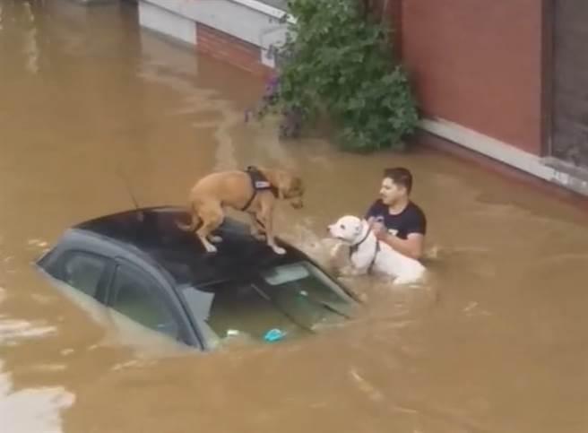 比利時連日暴雨導致各地傳出淹水災情,2隻狗狗因此受困街道,附近民眾見狀急忙涉水救援。(圖/翻攝自TikTok/@bicause_whynot)