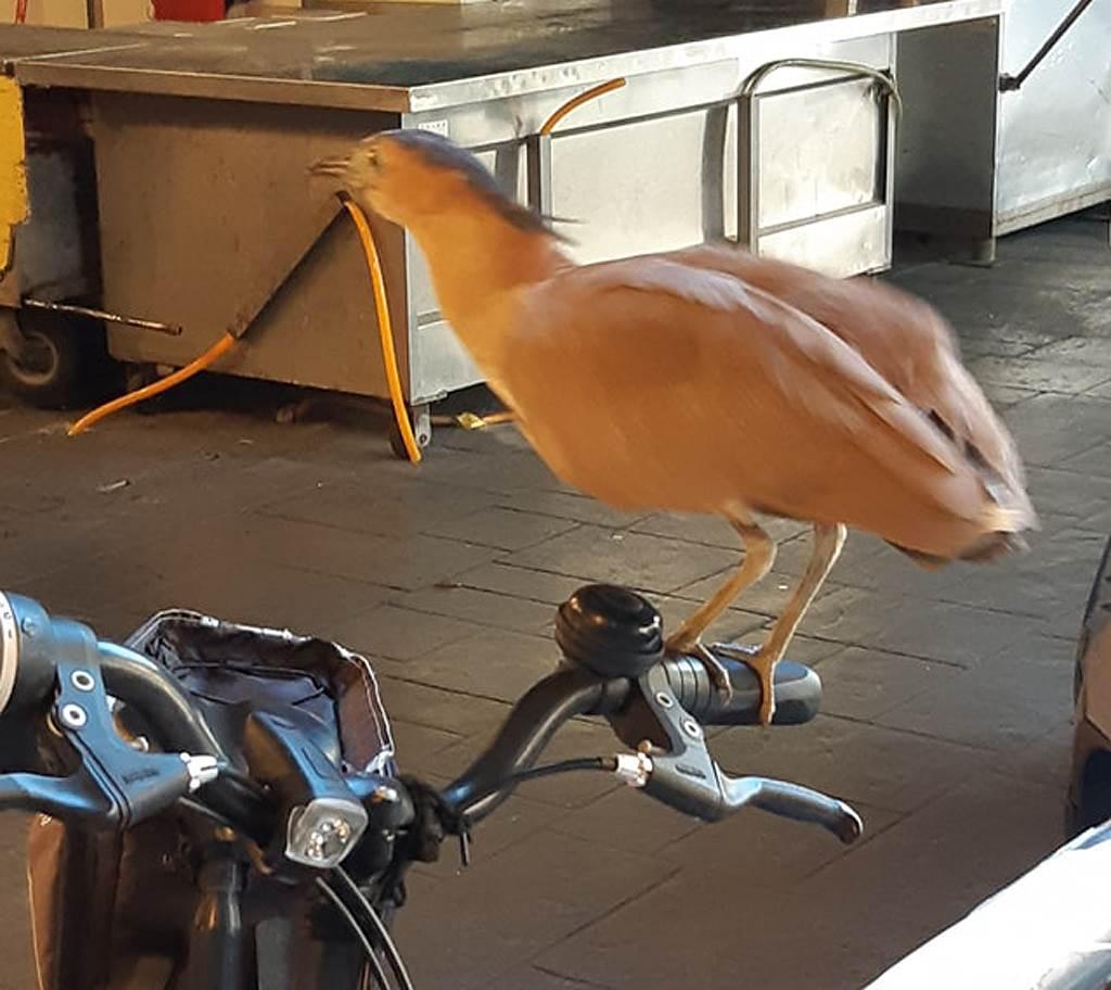 一名女網友發現腳踏車被神秘怪鳥霸佔,對此就有眼尖內行人要原PO不要輕舉妄動,否則就「屎」定了!(圖/翻攝自《路上觀察學院》臉書社團)