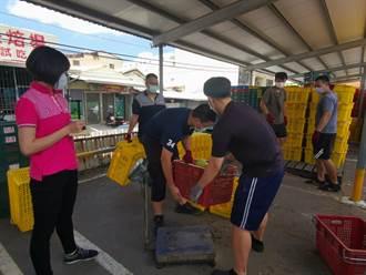 台南多元加工芒果收購已達2000公噸 23日將提前截止