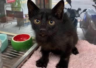 2月幼貓卡分隔島 新北市動保緊急救援助找到新家