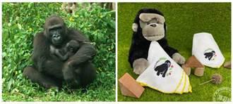 金剛猩猩「二寶」命名 Ringo或Kijani讓您選 有好禮!