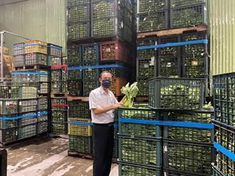 烟花颱風逼近葉菜上漲 農民忙搶收