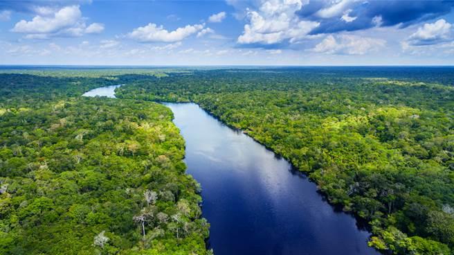 科學家在亞馬遜雨林發現「殭屍蛙」,不僅長相非常特殊,且終身躲在土裡。(示意圖/達志影像)