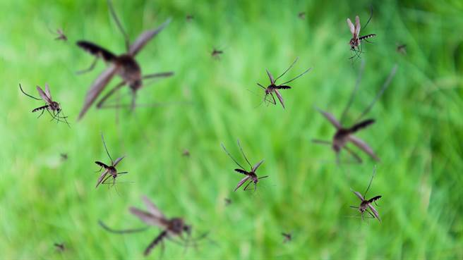 俄羅斯日前有民眾拍到上百萬隻蚊蟲聚集形成蚊捲風,讓所有人傻眼。圖片為示意圖。(圖/shutterstock)