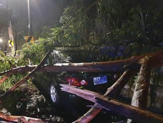 烟花陸警未發已釀災 疑雨勢過大 龜山樹倒壓車