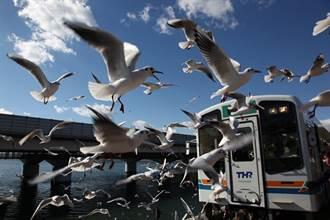超狂海鷗群朝你飛來!冬季限定 來日本靜岡搭海鷗列車