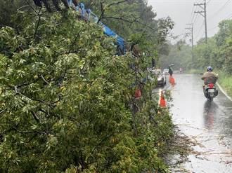 烟花來襲 龍潭路樹被吹倒釀擦撞車禍