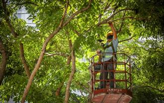 烟花颱風撲北台 新北市防颱修樹整備