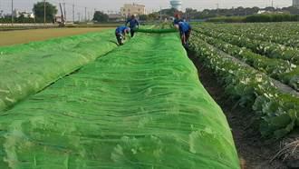 烟花颱風恐釀災損 中市農業局提醒農民防範