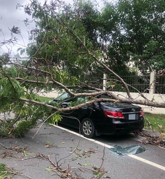 烟花颱風逼近帶來風勢 台南民權路樹倒砸車