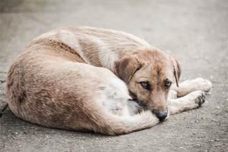 堅信找到失蹤3年愛犬 牠卻不肯認主人 獸醫揭心碎原因