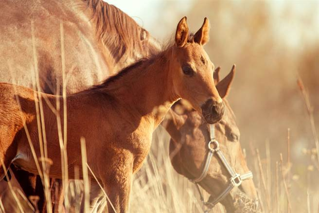 19歲男子日前闖入馬術場性侵一隻母馬,過程全被監視器拍攝下來。(示意圖/達志影像)